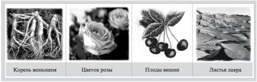 Вяземский А Практическое пособие по химии класс Журнал  Главная функциональная часть различных растений