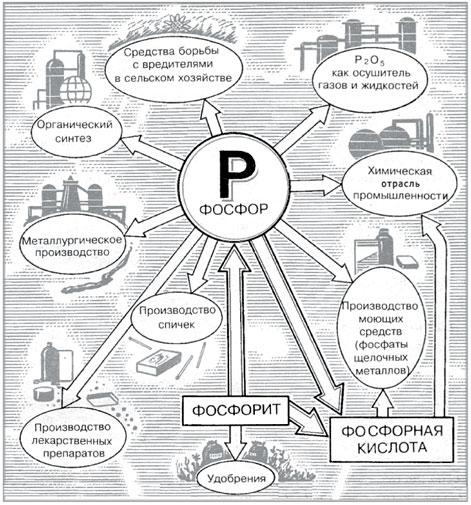 Круговорот фосфора в природе.