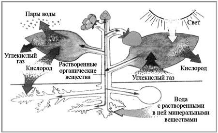 Наглядные схемы по химии