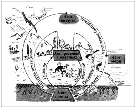 Рис.  Схема круговорота азота в природе, нарисованная Тюбиком.  В чем ошибка художника?